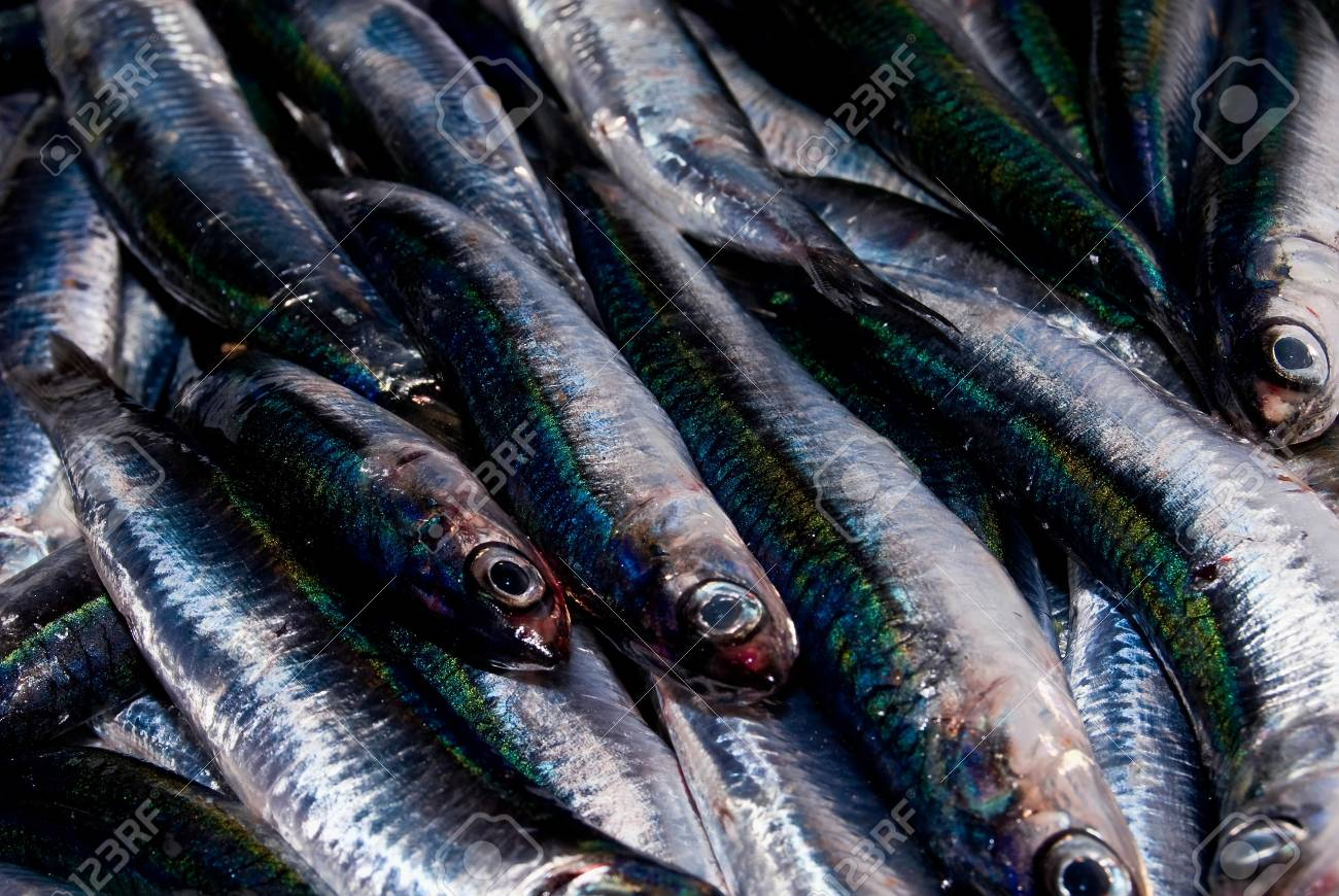 a catch of fresh anchovies - 32689076