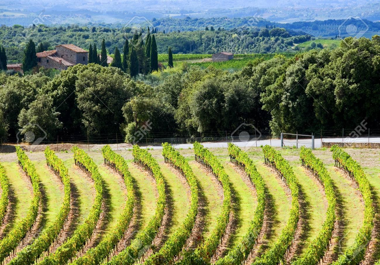 Hills near Siena(Tuscany, Italy) with vineyards. - 33033124