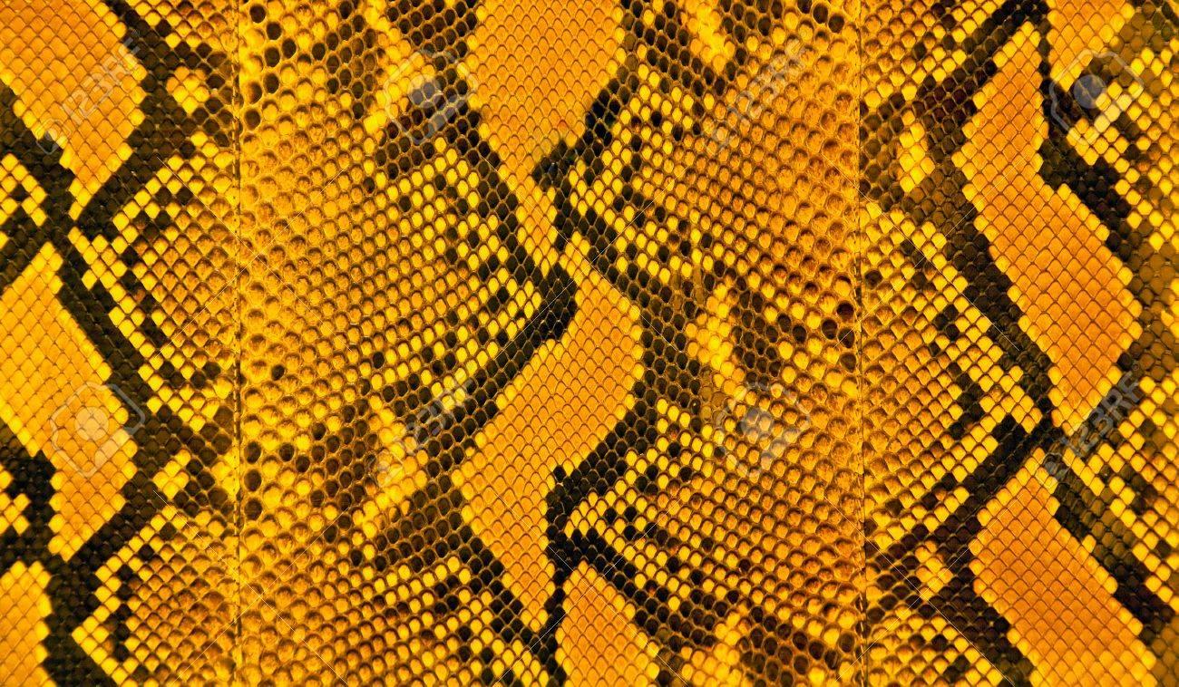 Orange black and yellow stripes of snakeskin - 43271253