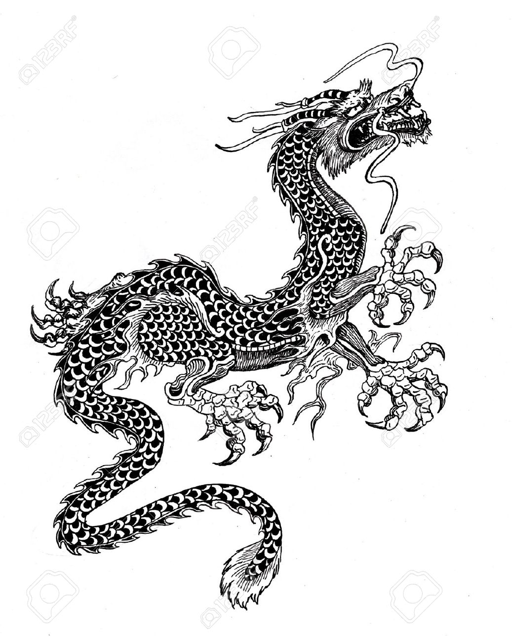 chinese dragon stock photo picture and royalty free image image