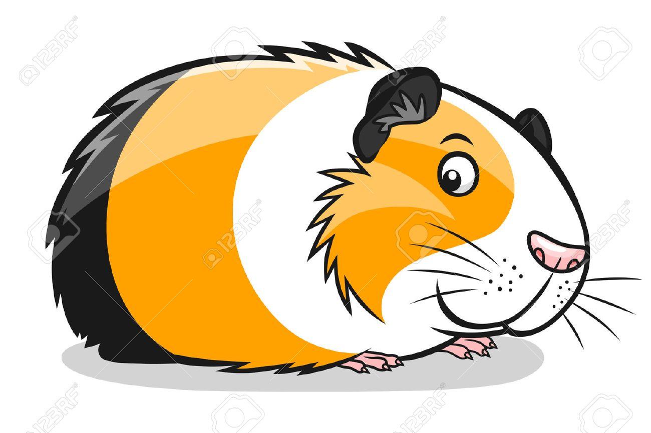 cartoon guinea pig - 59092961