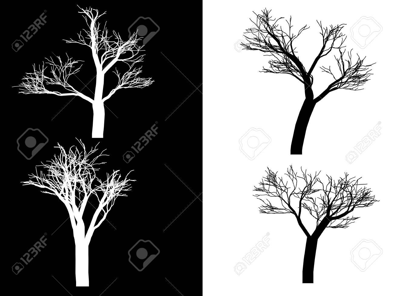 Illustration, trees isolated on a black and white background Stock Vector - 8236756