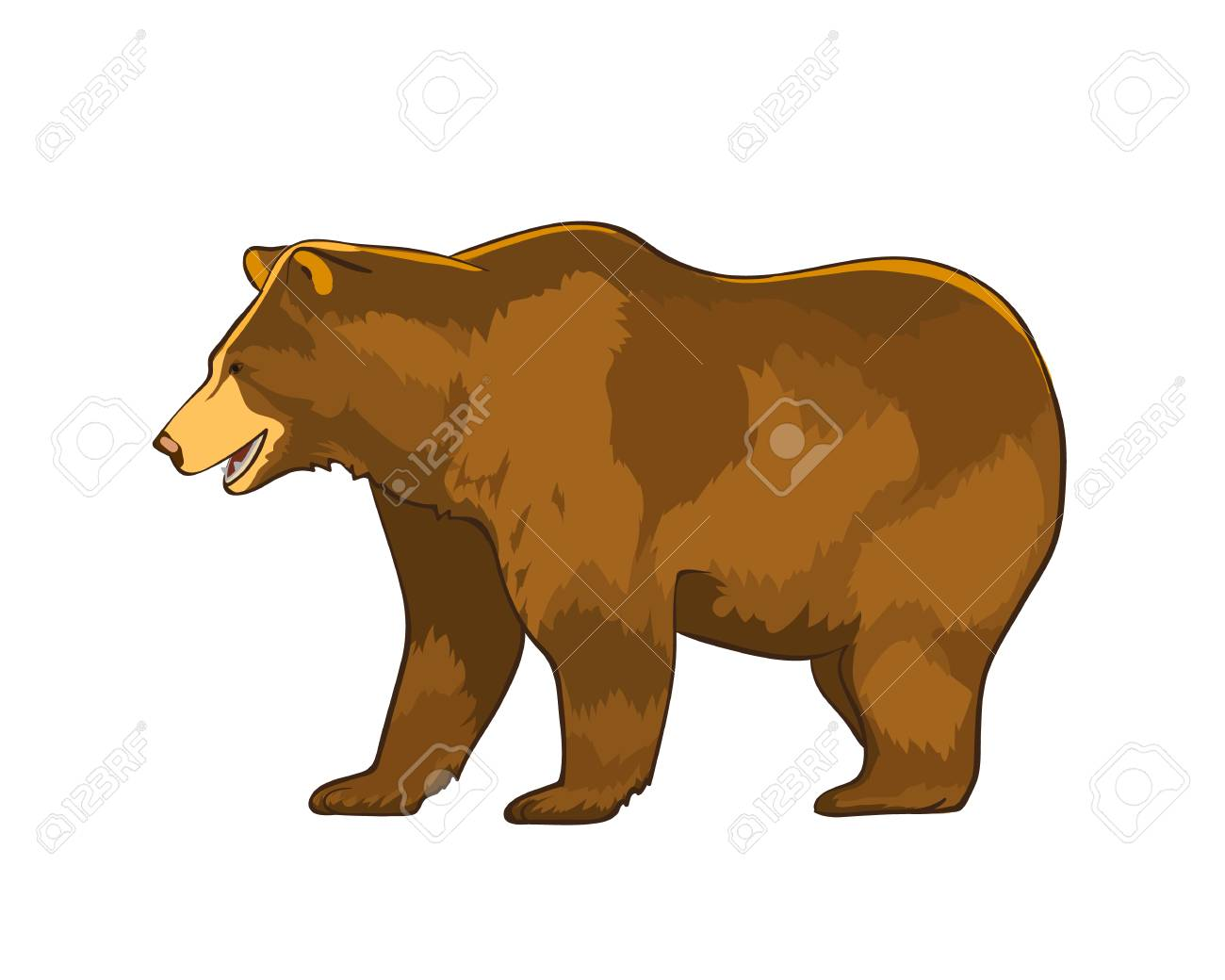 Vector illustration of bear Grizzly isolated on white background - 92934101