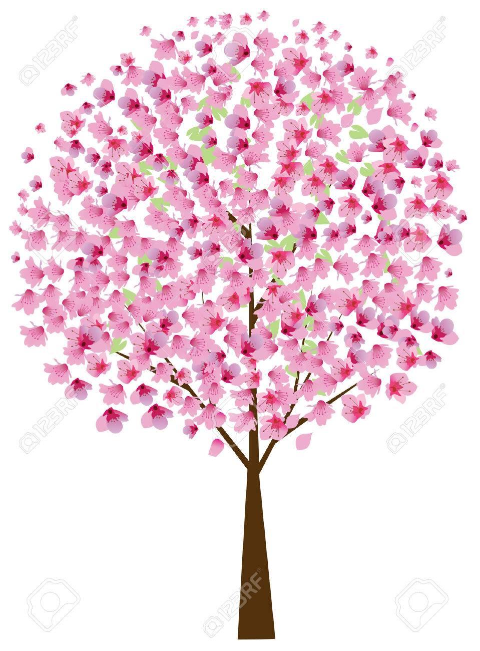cherry tree in blossom Stock Vector - 8435928