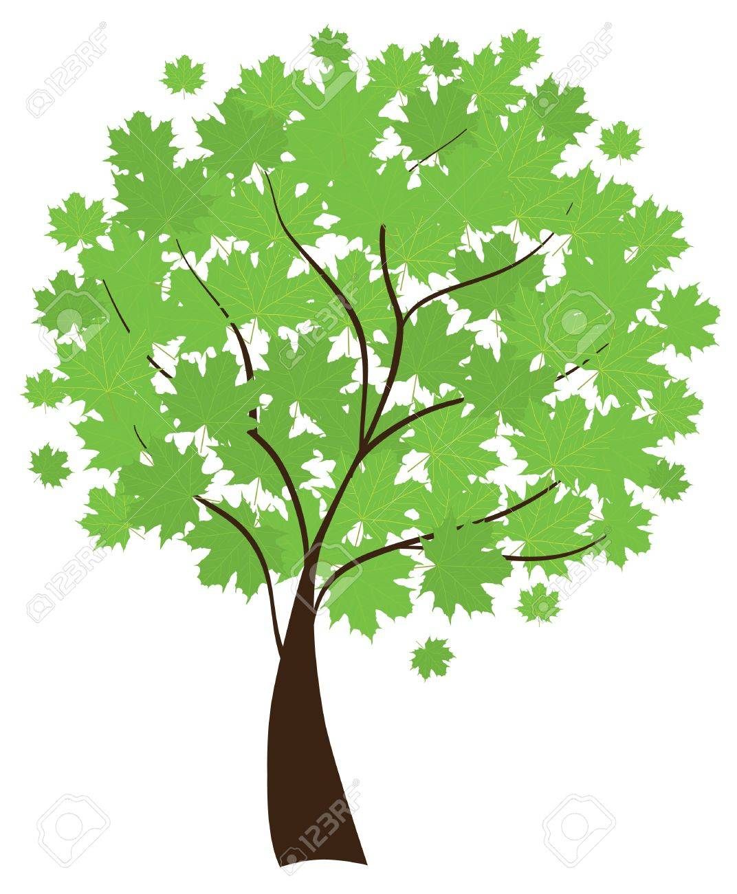 maple tree Stock Vector - 9732983