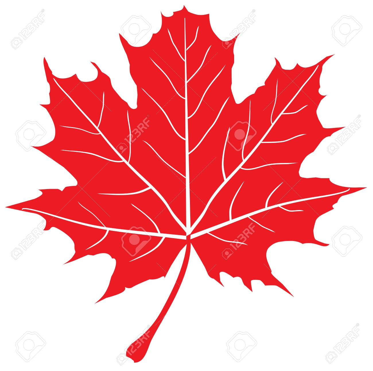 vector illustration of red maple leaf - 58816116