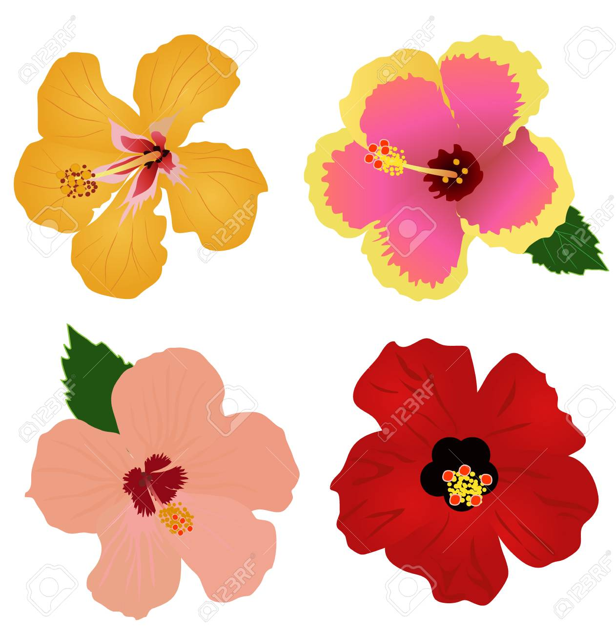 Vector illustration of hibiscus flowers set of four royalty free vector vector illustration of hibiscus flowers set of four izmirmasajfo