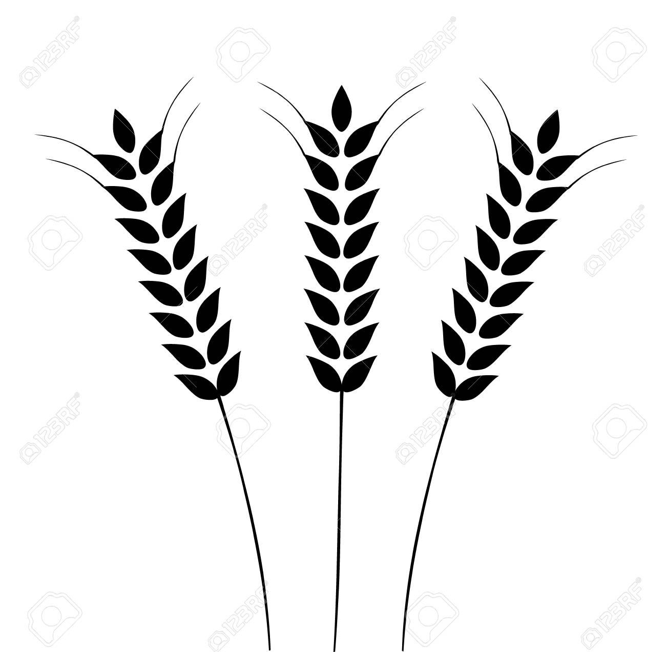 vector illustration of ears of wheat barley or rye ideal for rh 123rf com barley vector eps vector barley and hops