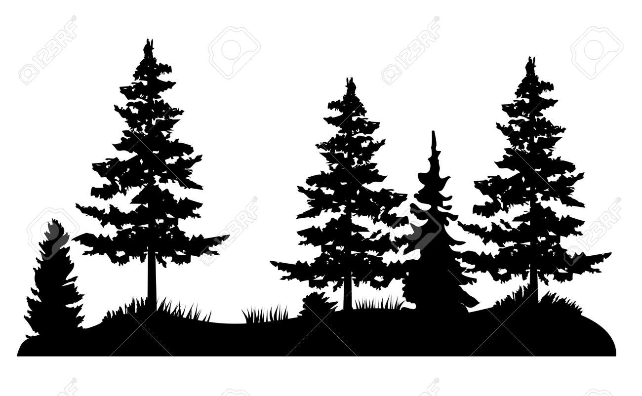 vector illustration of Pine trees, wilderness, outdoors background. Forest. - 165215261