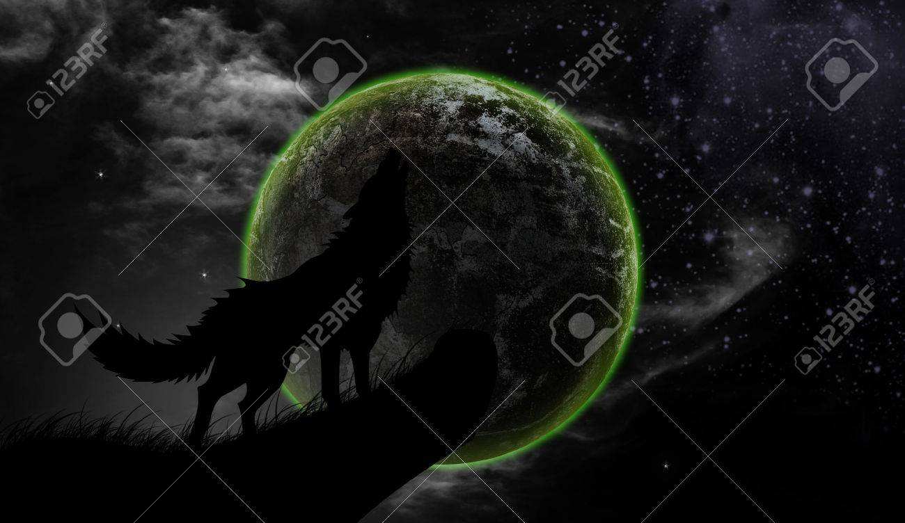 wolf howling at the moon images u0026 stock pictures royalty free