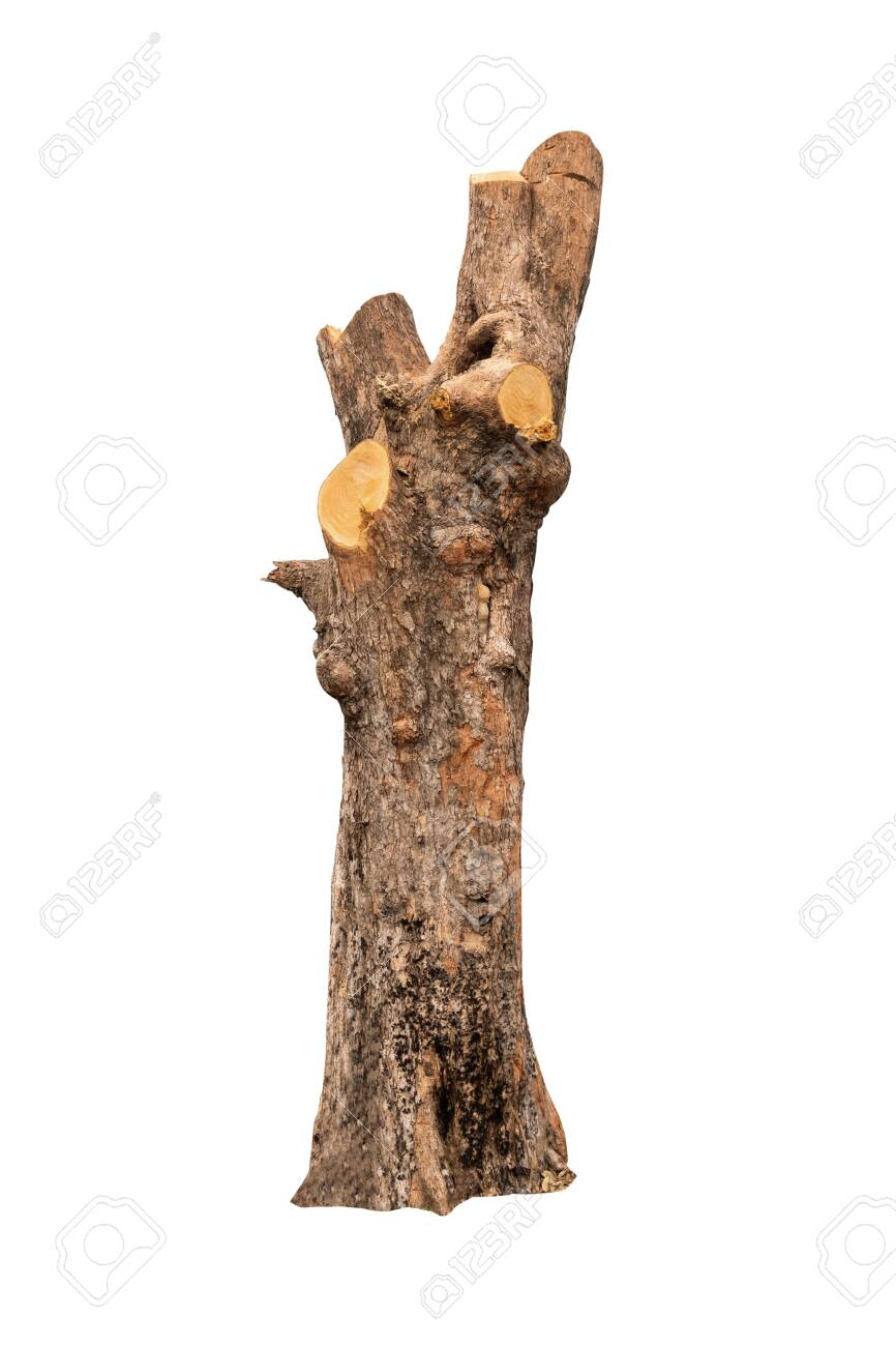 isolated tree bark with white background and with clipping path - 122373037