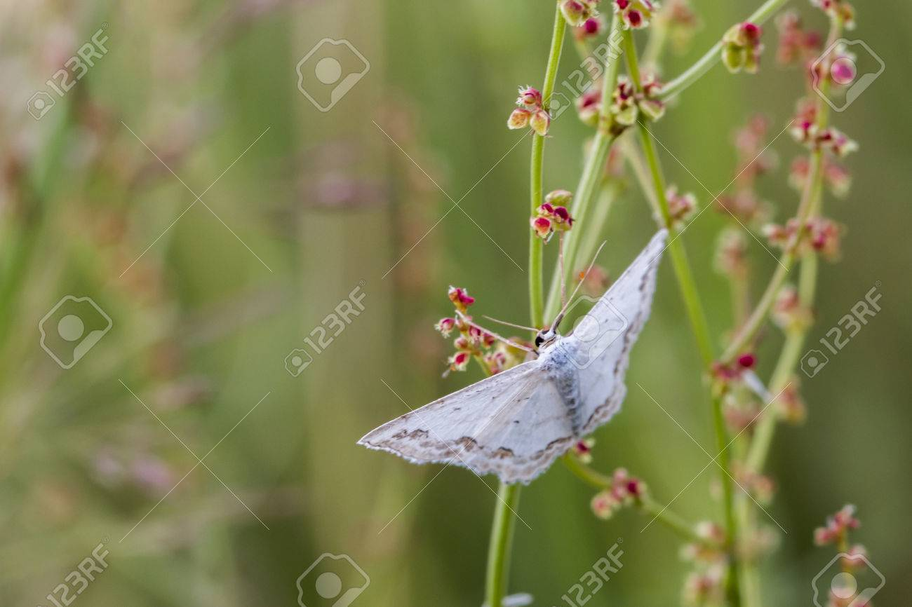 A lace border is sitting on a grass-stock Stock Photo - 81272972