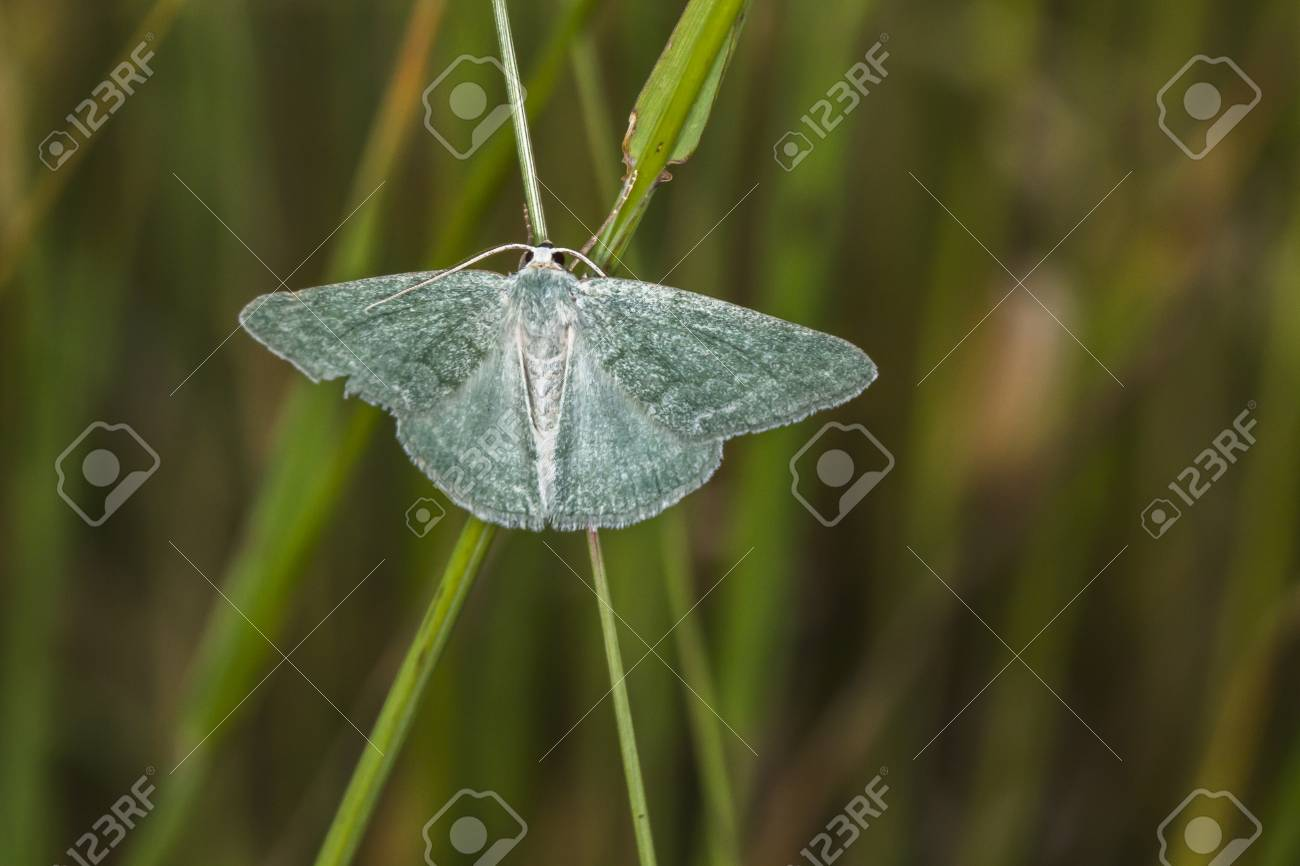 A grass emerald is sitting on a grass-stock Stock Photo - 81273041