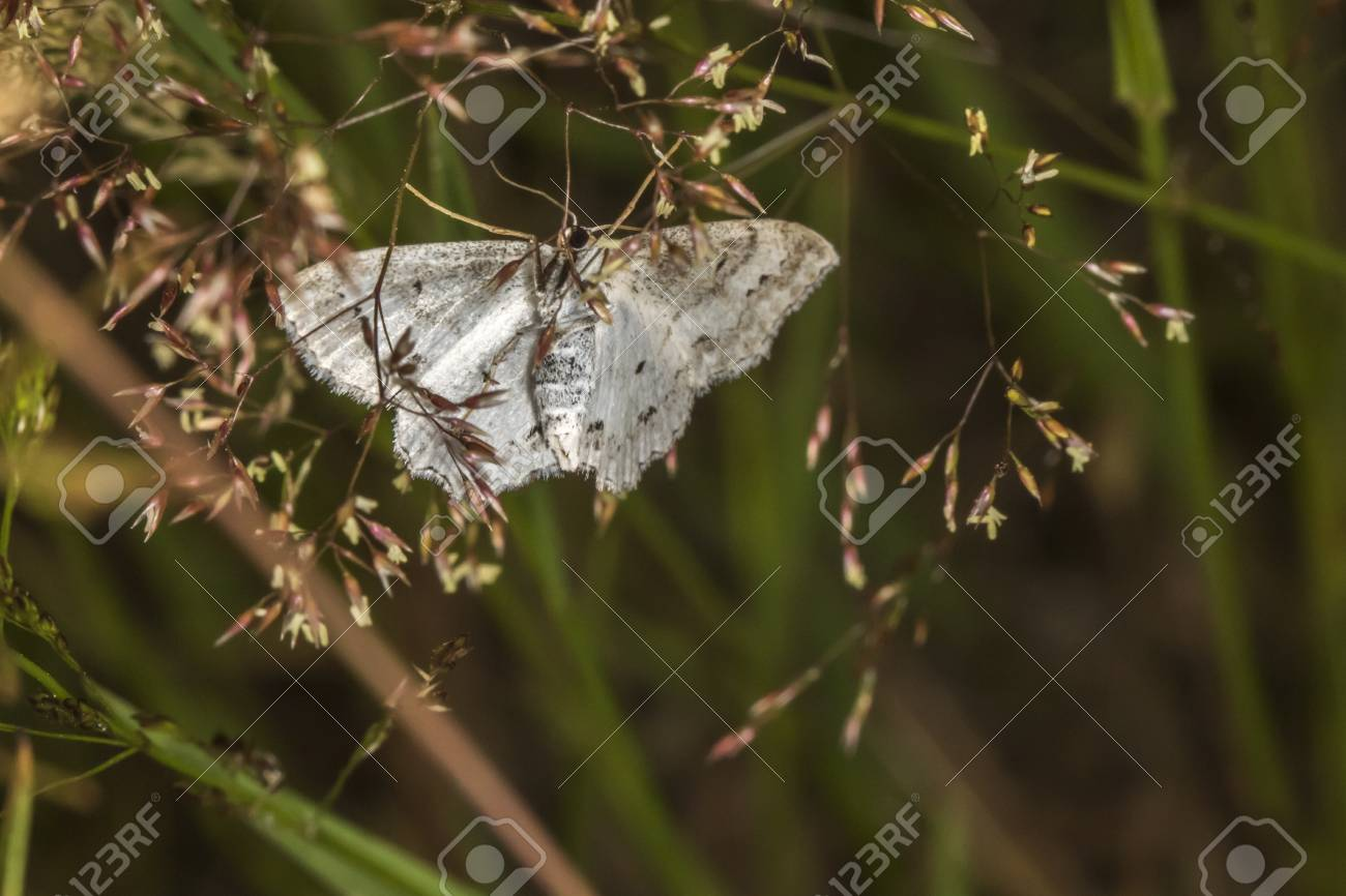 A lace border is sitting on a grass-stock Stock Photo - 81273043