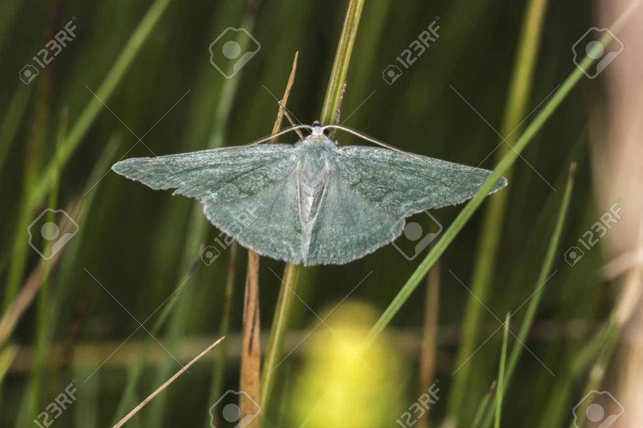 A grass emerald is sitting on a grass-stock Stock Photo - 81273051