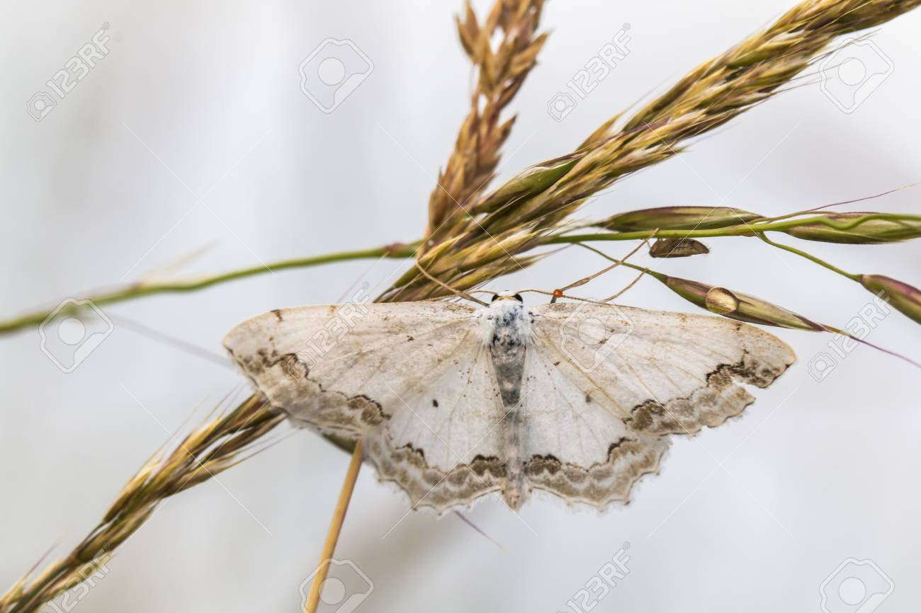 A lace border is sitting on a grass-stock Stock Photo - 81273049