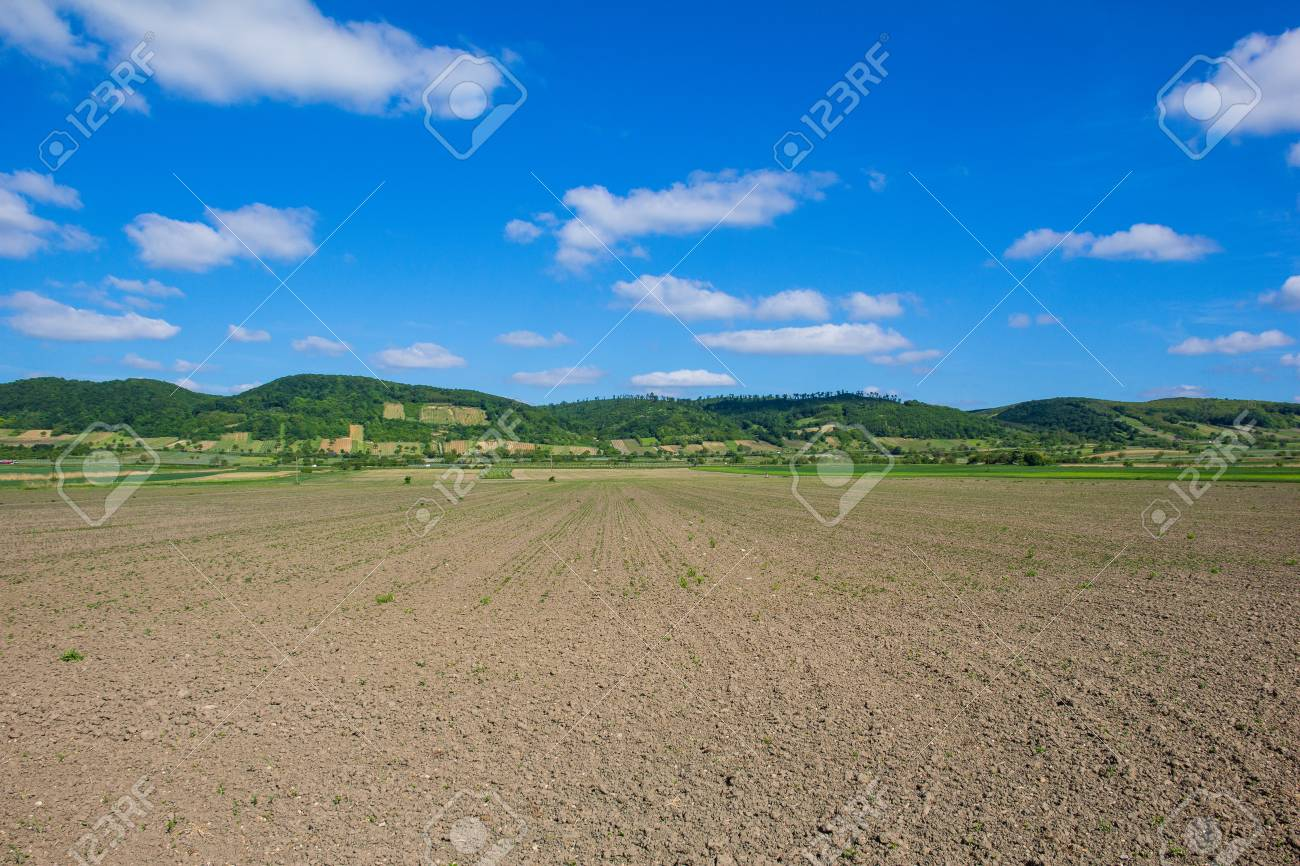 Agricultural Field In Burgenland Close to Lake Neusiedl Stock Photo - 40549610