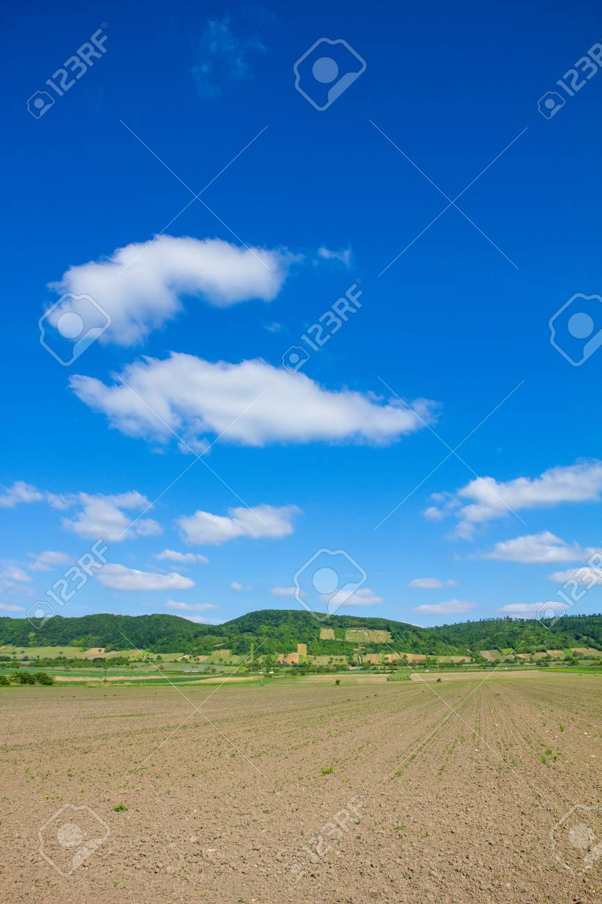 Agricultural Field In Burgenland Close to Lake Neusiedl Stock Photo - 40549611