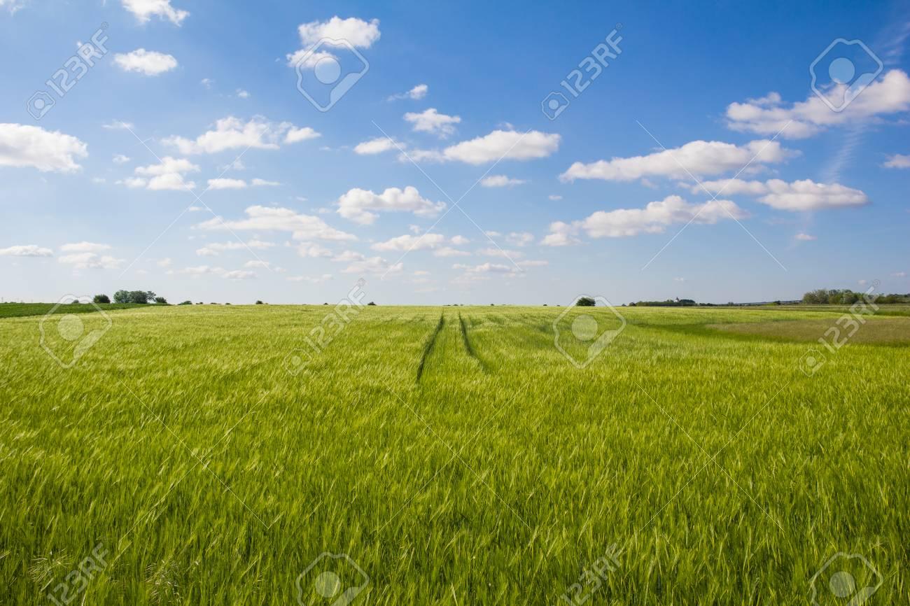 Beautiful Landscape Green Barley Blue Sky Stock Photo - 40549617