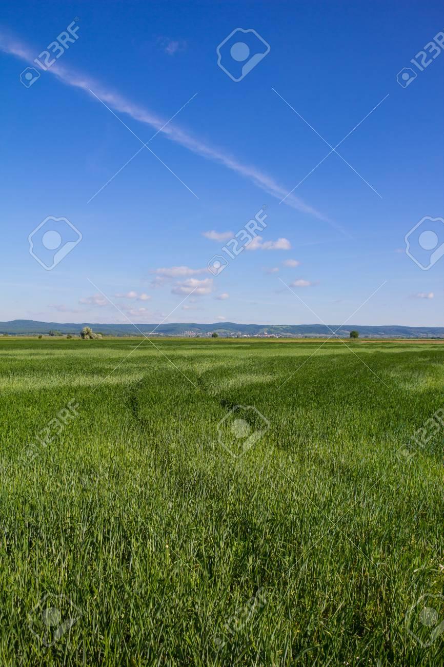 Beautiful Landscape Green Barley Blue Sky Stock Photo - 40549540
