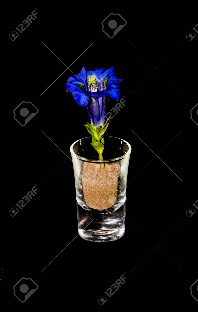Closeup of Gentian In Glass On Black Background Stock Photo - 40548706