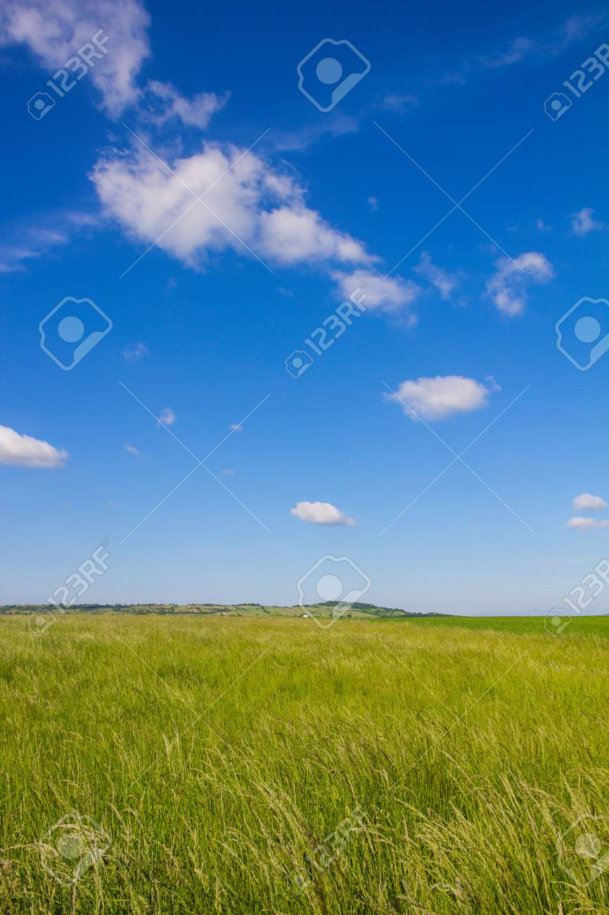 Beautiful Landscape Green Barley Blue Sky Stock Photo - 40549546