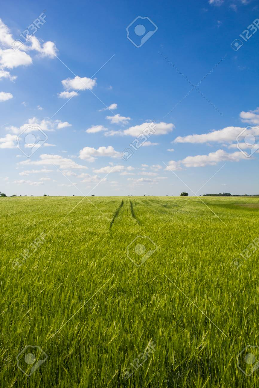 Beautiful Landscape Green Barley Blue Sky Stock Photo - 40549548