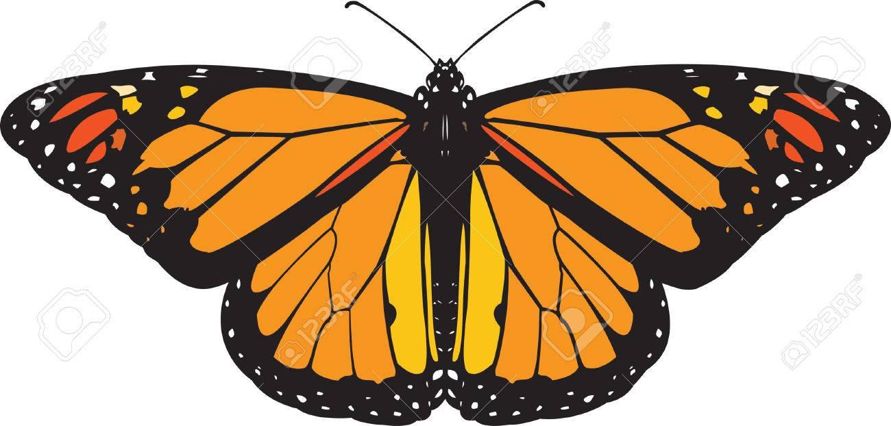 Monarch butterfly vector Stock Vector - 5260754