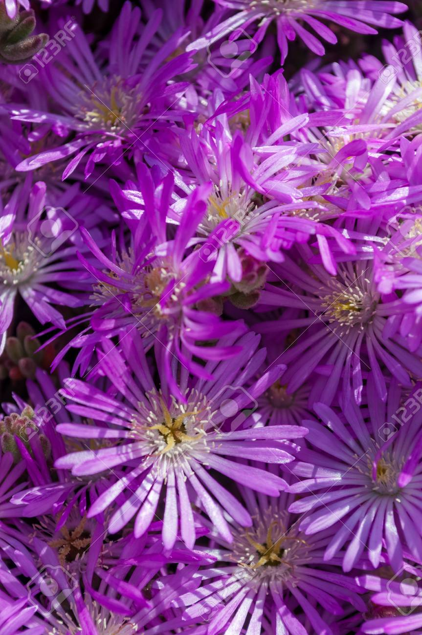 Closeup Of Small Purple Flowers In Sunny Day With Natural Light