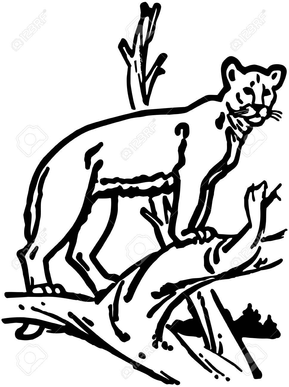 mountain lion royalty free cliparts vectors and stock illustration rh 123rf com  mountain lion clipart free