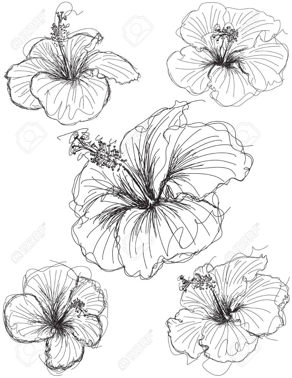 Hibiscus flower sketches hand drawn hibiscus flower sketches hibiscus flower sketches hand drawn hibiscus flower sketches stock vector 38433242 izmirmasajfo