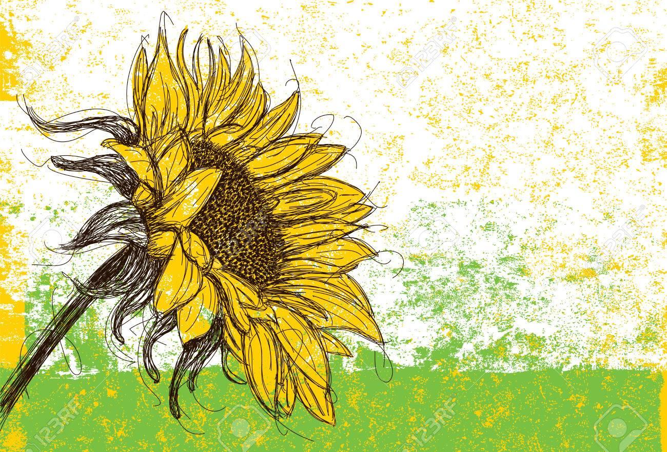 Sunflower - 45576117