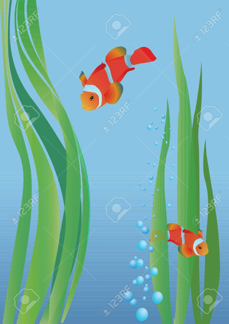 Two anemonefish between seaweed. Vector. Stock Vector - 951532