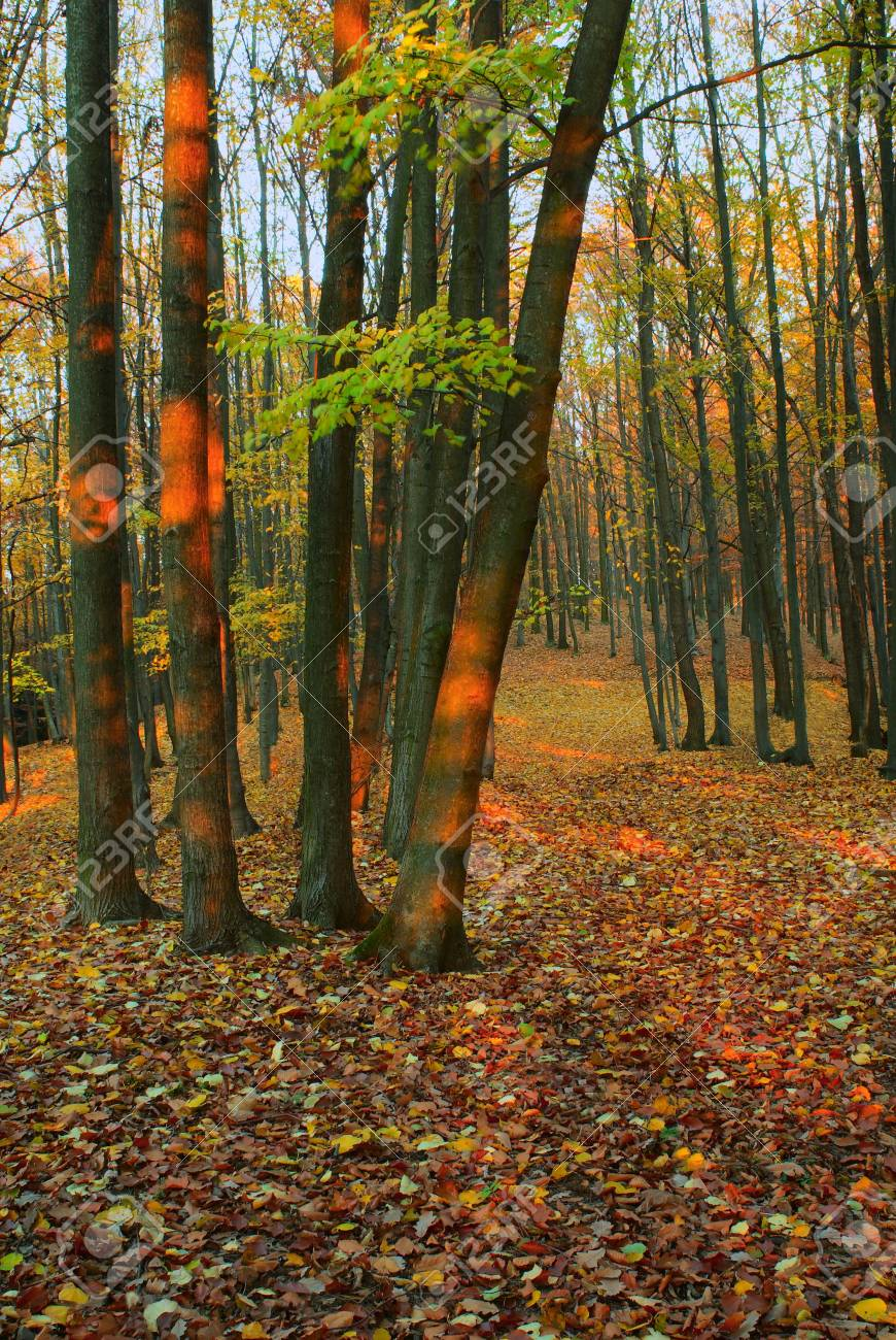 The forest path with fallen autumn leaves Stock Photo - 2020136