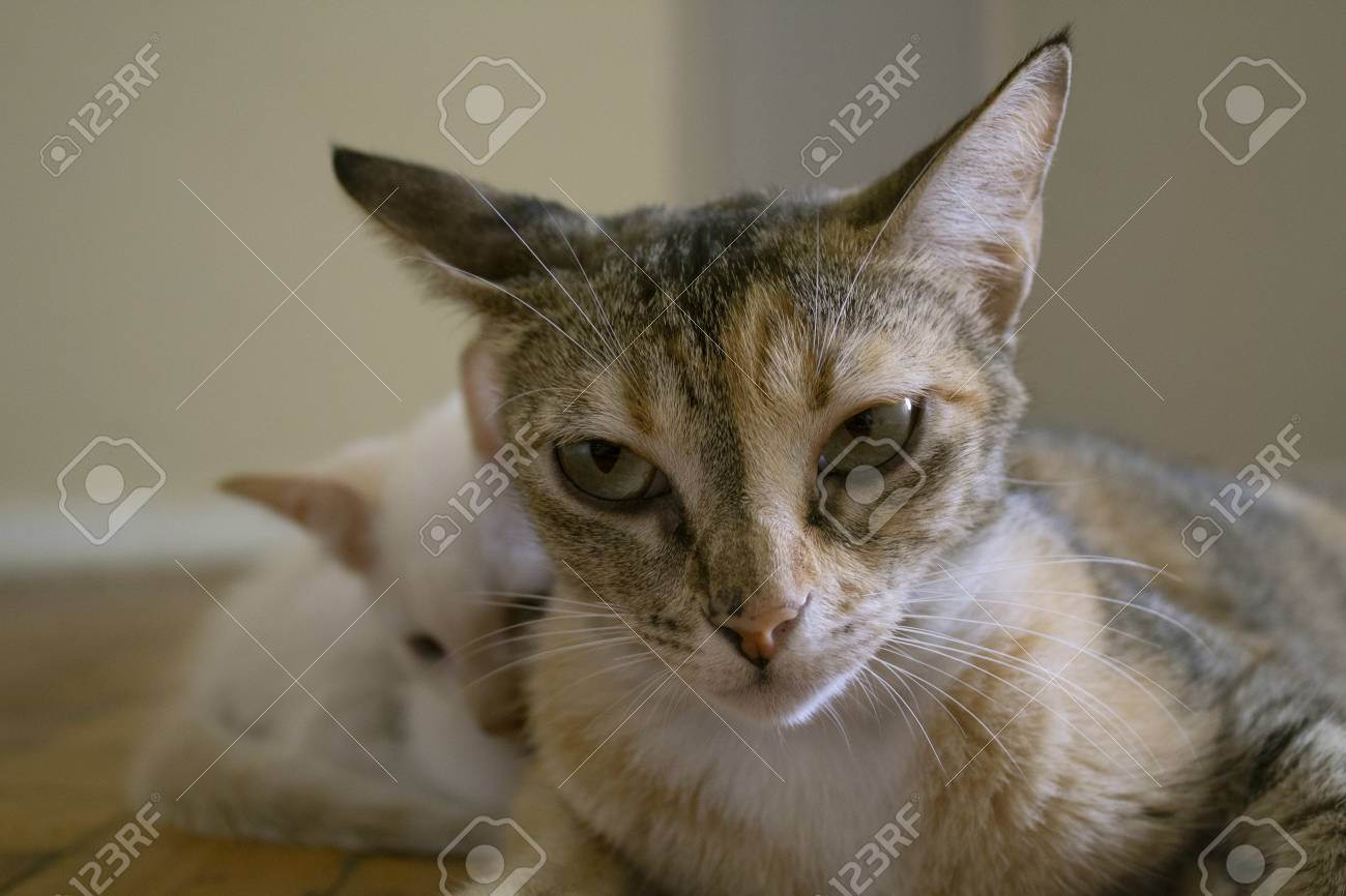 Boring facial expression. Mom cat with kitten. - 105027268