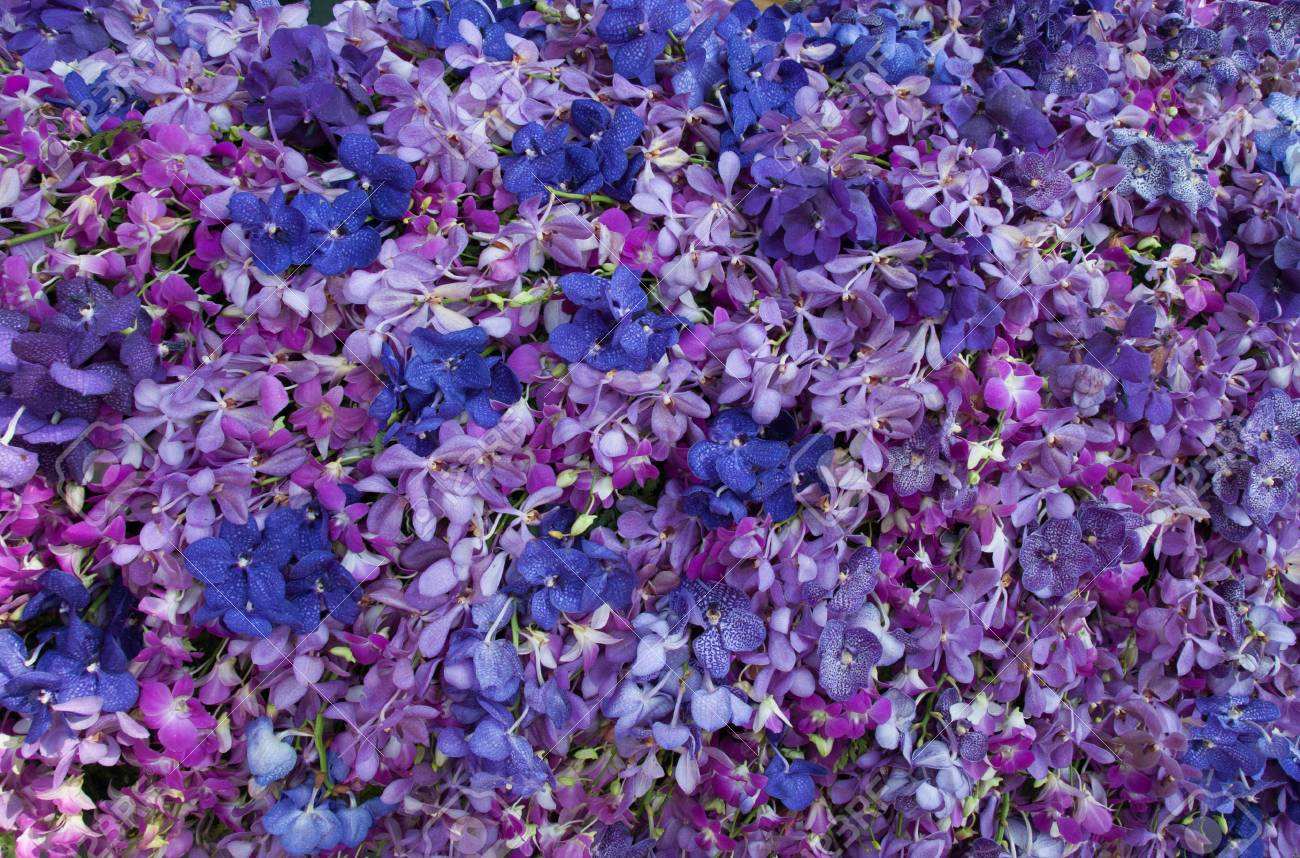 Blue Purple Orchid Flower Background Stock Photo Picture And