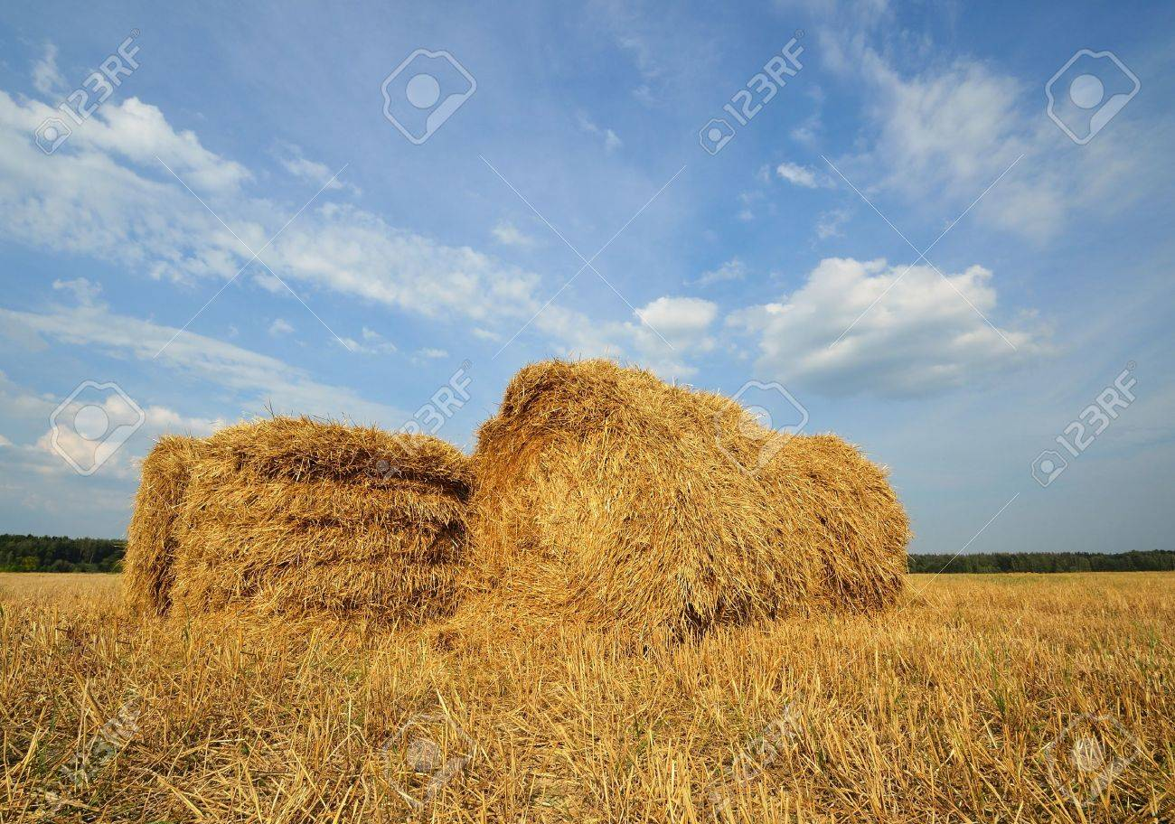 Straw bales in the countryside on a perfect sunny day Stock Photo - 13335001