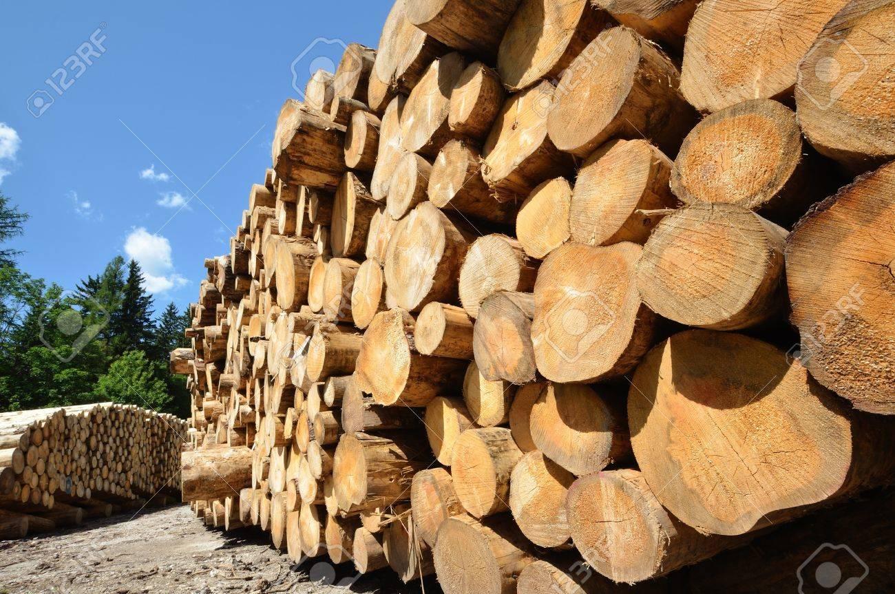 pile of wooden logs under blue sky - 15563268