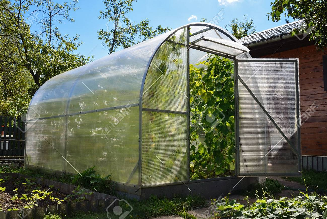Greenhouse in back garden with cucumber plants - 58304325