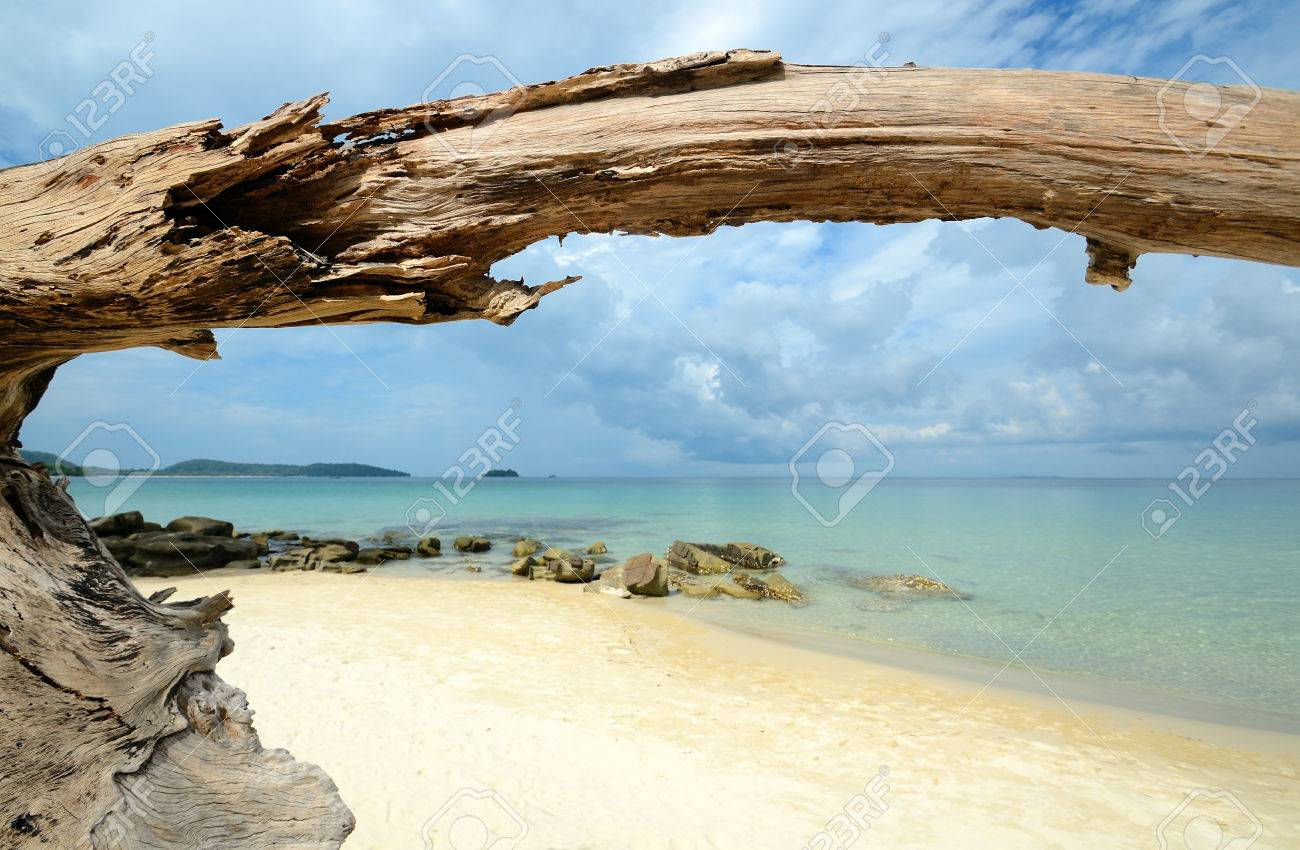 dry tree at the sandy tropical beach - 73844638