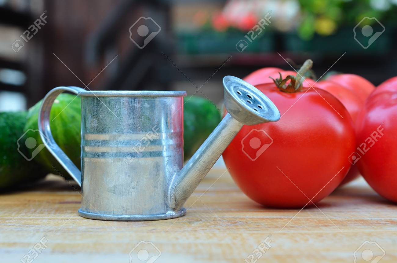 small watering can with tomatoes and cucumbers on the wooden surface. Selective focus - 87249131