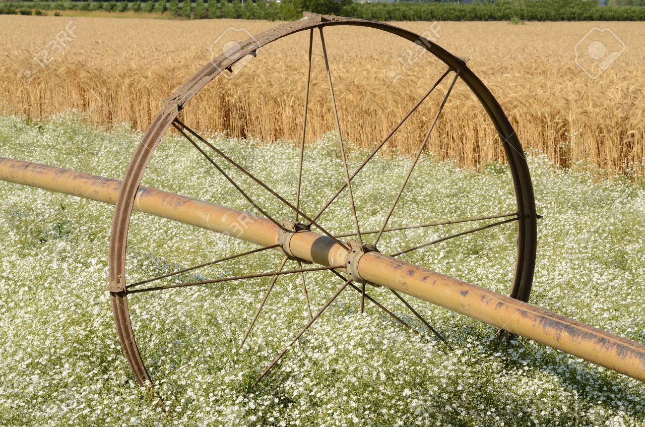 A large irrigation pipe wheel in a field of seeded out clover in the Willamette Valley & A Large Irrigation Pipe Wheel In A Field Of Seeded Out Clover ...