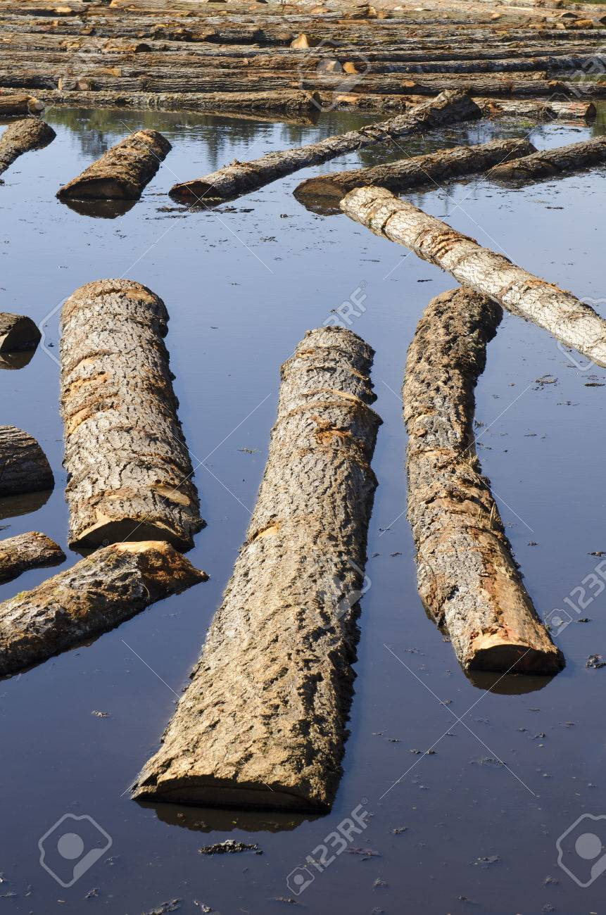 Logs sit in a sawmill pond awaiting processing in Oregon