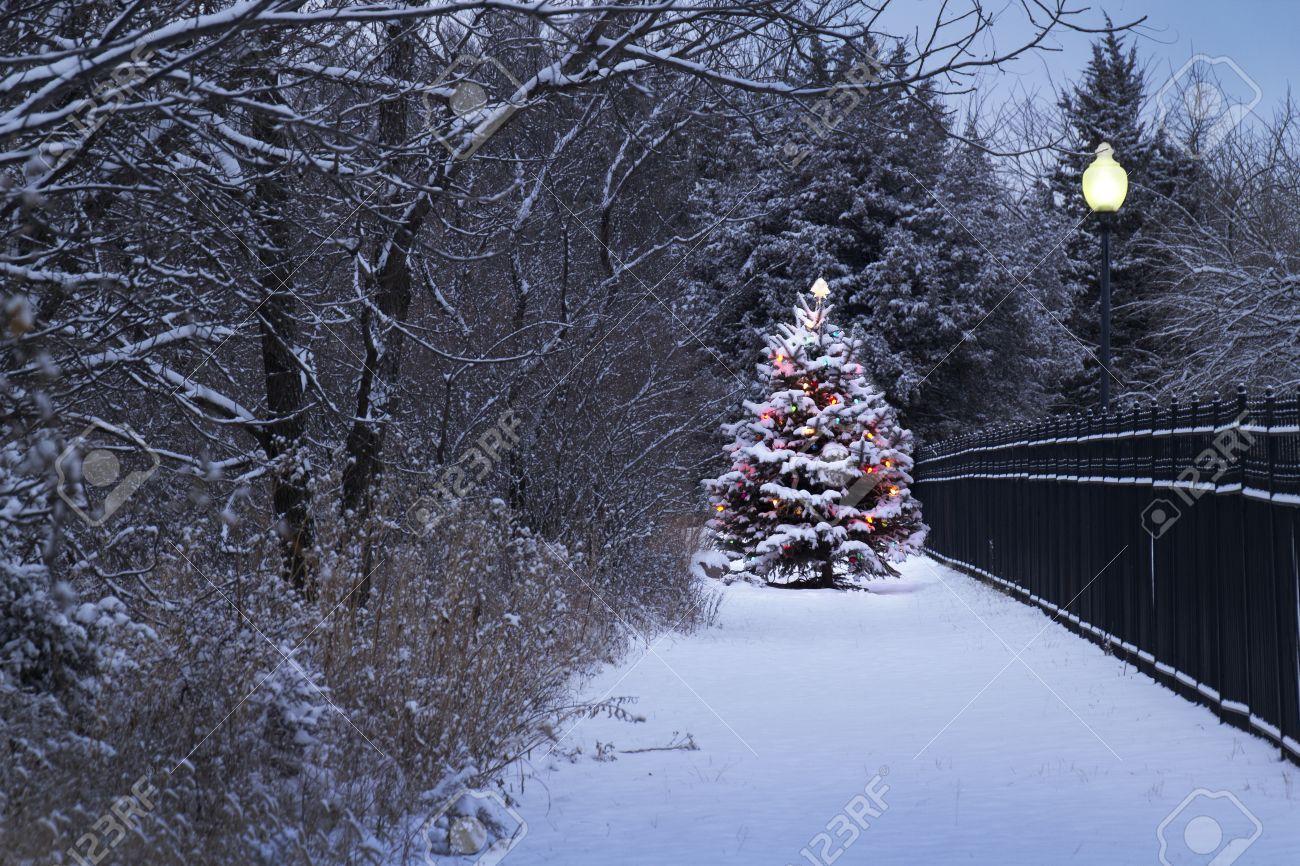 este nevado rbol de navidad se ve clara contra los tonos azules oscuros de esta escena