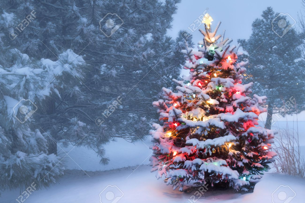 Christmas Tree Snow.This Decorated Outdoor Snow Covered Christmas Tree Glows Brightly
