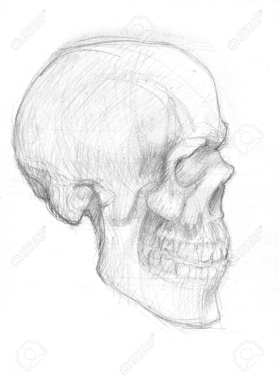Hand drawn illustration of a human skull original artistic pencil sketch on paper lateral