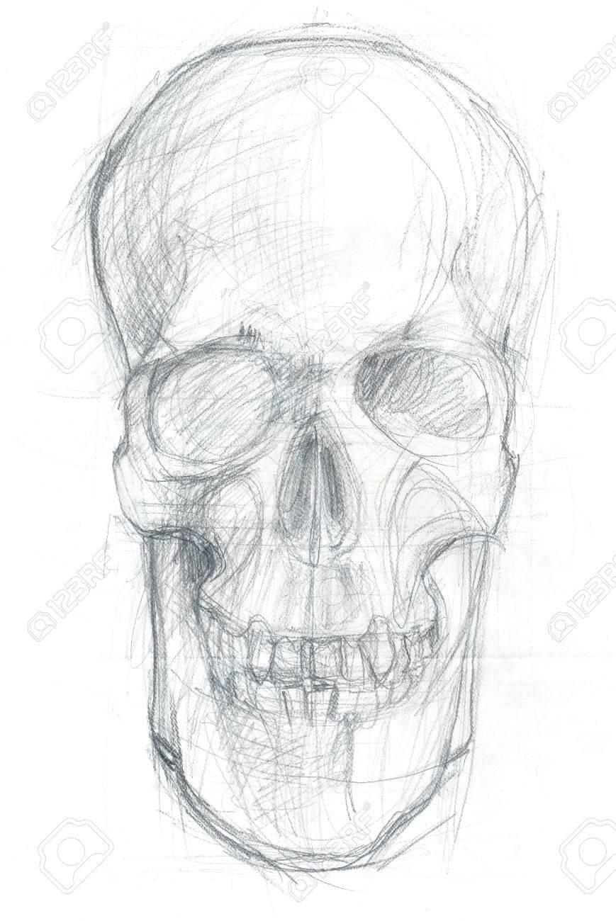 Hand drawn illustration of a human skull original artistic pencil sketch on paper front