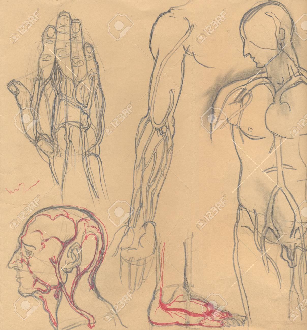 Hand Gezeichnete Illustrationen Von Verschiedenen Menschlichen ...