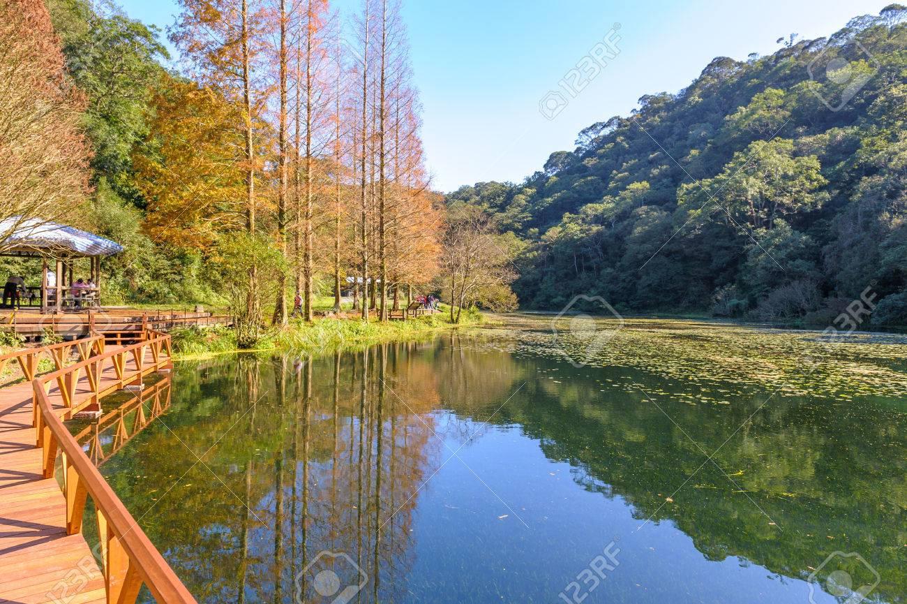 landscape of fushan botanical garden in yilan, taiwan - 62814988