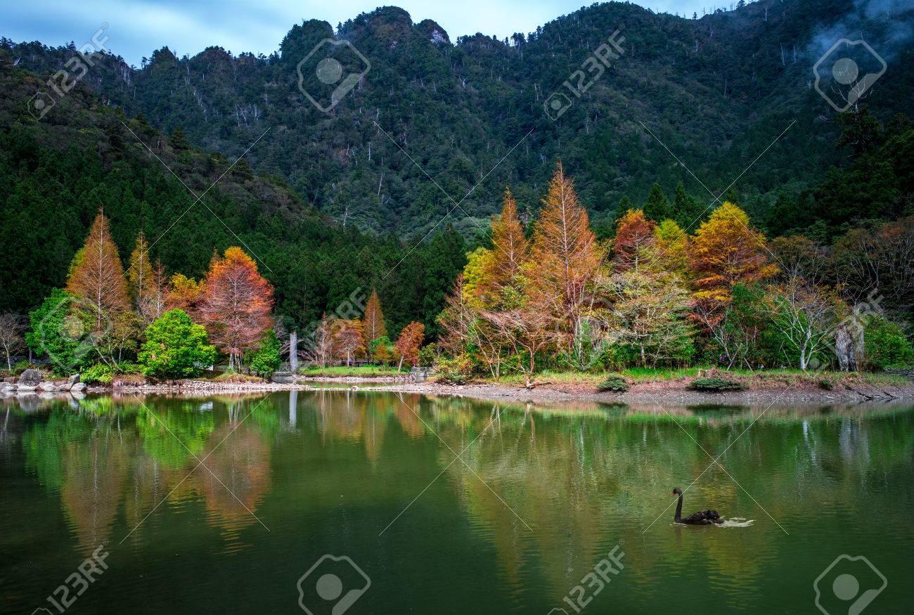 mingchi forest recreation area in yilan, taiwan - 67007784